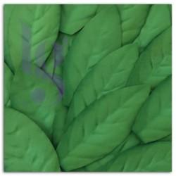 Set de Folhas verdes
